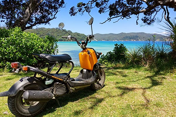 Paddles and Saddles on Great Barrier Island